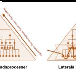 Vertikala&Laterala processer