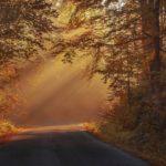 autumnal-beautiful-color-217114